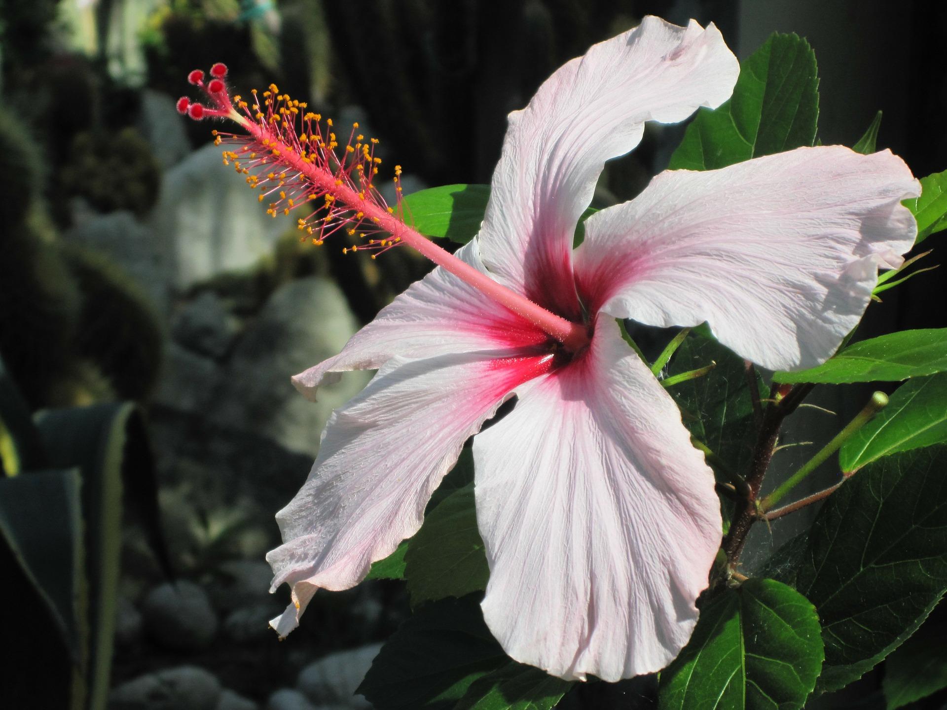 bloem Ischia excursie